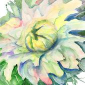 Hermosa flor — Foto de Stock
