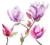 Beautiful Magnolia flowers — Stock Photo