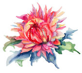 Watercolor illustration with beautiful flowers — Foto de Stock