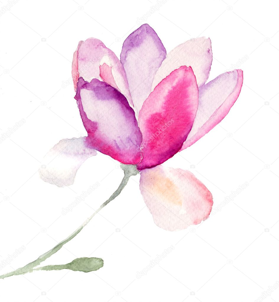 Magnolia, watercolor illustration — Stock Photo #15637909
