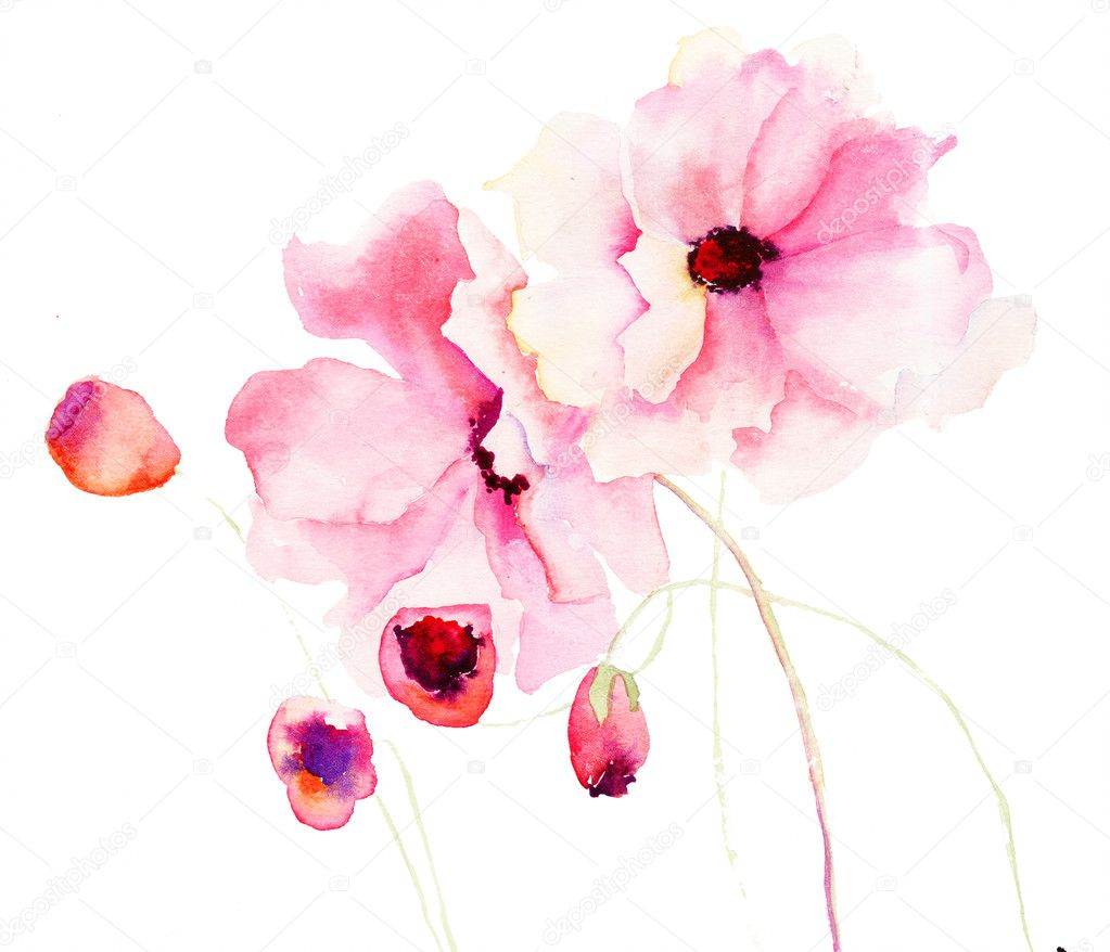 Colorful pink flowers, watercolor illustration  Stock Photo #15637953