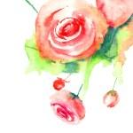 Roses flowers — Stock Photo