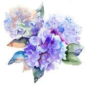 Beautiful Hydrangea blue flowers — Stock Photo