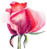 Flor rosa — Foto Stock
