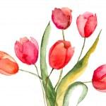 Beautiful Tulips flowers — Stock Photo #18723575