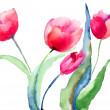 Beautiful Tulips flowers — Stock Photo #18723595