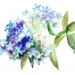 Beautiful Hydrangea blue flowers — Stock Photo #19810451