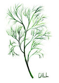 Dill, watercolor illustration — Foto Stock