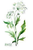 Watercolor illustration of Anise — Stock Photo