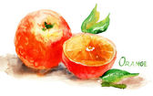 Watercolor illustration of Orange — Stock Photo