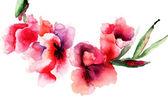 Stylized Gladiolus flowers — Stock Photo