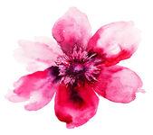 Hermosa flor de color rosa — Foto de Stock