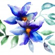 Beautiful Blue flowers - 图库照片