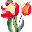Stock Photo: Tulips flowers