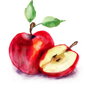Stylized watercolor apple illustration — Stock Photo