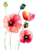 Poppy bloemen — Stockfoto