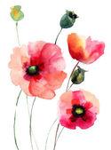 Vallmo blommor — Stockfoto