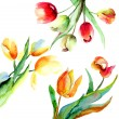 Colorful Tulips flowers — Stock Photo