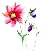 Beautiful Sumer flowers — Stock Photo