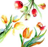 Fiori di tulipani colorati — Foto Stock