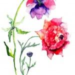 schöne Pfingstrose Blumen — Stockfoto
