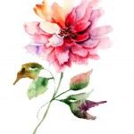 Beautiful Peony flower — Stock Photo
