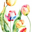 Beautiful tulips flowers — Stock Photo