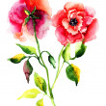 Roses flower — Stock Photo