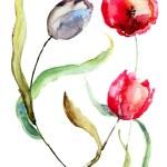 Beautiful Tulips flowers — Stock Photo #25074933