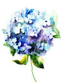 Beautiful Hydrangea blue flowers — Stock Photo