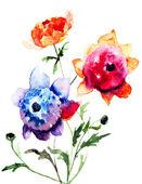 Beautiful Peony flowers — Stock Photo