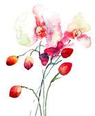 Fiori di orchidee rosa — Foto Stock