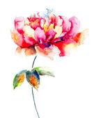 Krásný růžový květ — Stock fotografie