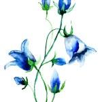 Bell flower — Stockfoto