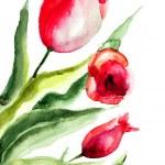 Beautiful Tulips flowers — Stock Photo