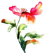 Colorful poppy flower — Stock Photo