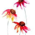 schönen Blumen — Stockfoto