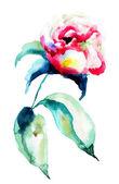 Flor de peônia linda — Foto Stock