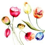 Tulips flowers — Stock Photo
