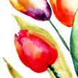 Beautiful Tulips flowers — Stock Photo #29121367