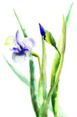 Fiori di iris — Foto Stock