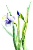 Iris flowers — Stockfoto