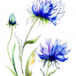 Blue Colored Cornflowers — Stockfoto