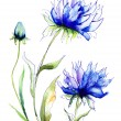 Blue Colored Cornflowers — Stok fotoğraf