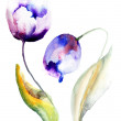 Blue Tulips flowers — Stock Photo