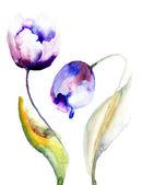 Blue Tulips flowers — Stock Photo