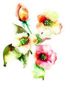 カラフルな夏の花 — ストック写真
