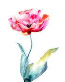 Tulipan kolorowe kwiaty — Zdjęcie stockowe