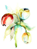 Watercolor painting of Tulips flowers — Stockfoto