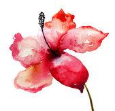Flor del lirio hermoso — Foto de Stock